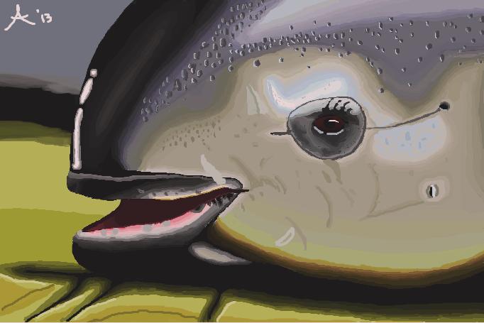 Vaquita Face