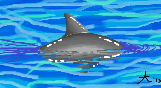 Vaquita Swimming