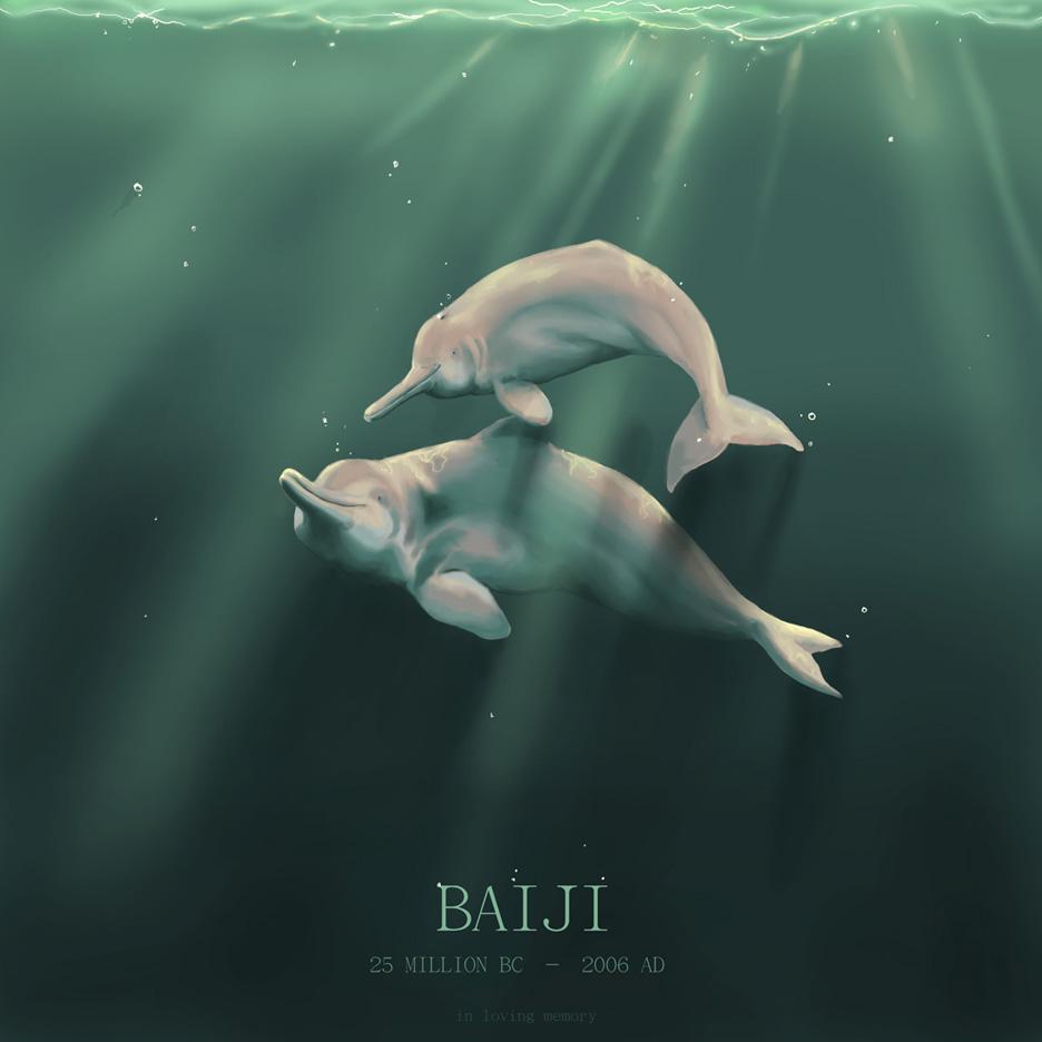 Baiji Dolphin BaijiBaby Baiji Dolphin