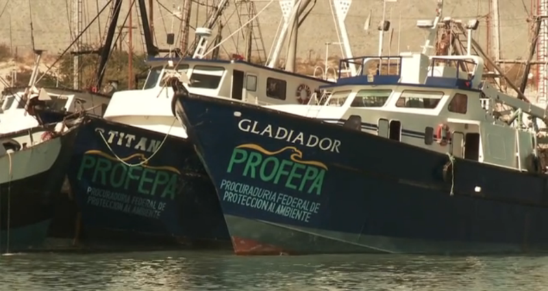 PROFEPA ships used for patrolling.  © 2008 Chris Johnson, earthOCEAN