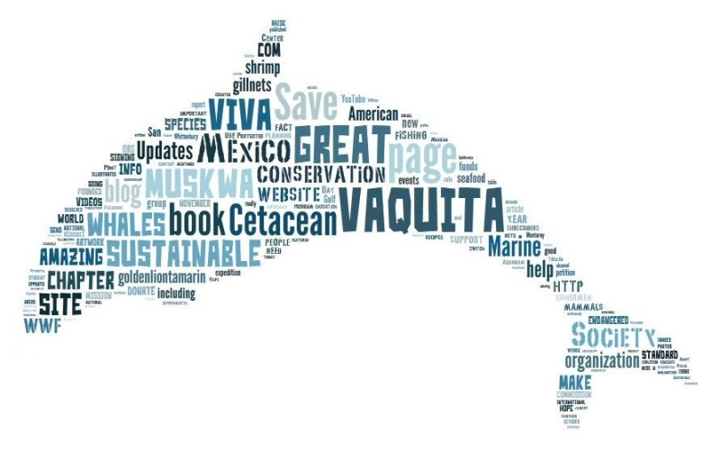 Vaquita Word Cloud