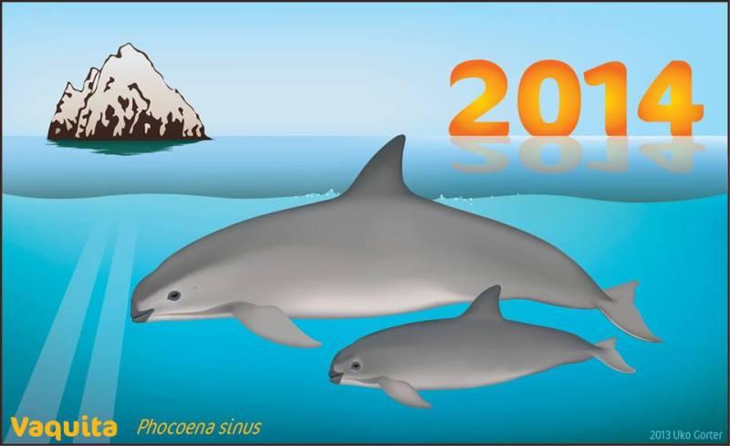 Vaquita 2014
