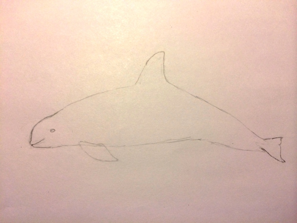 How to draw a Vaquita (1/6)