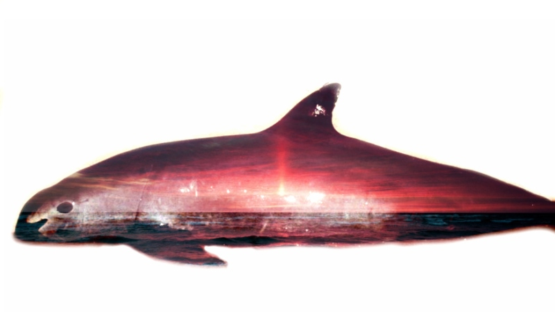 Vaquita Double Exposure